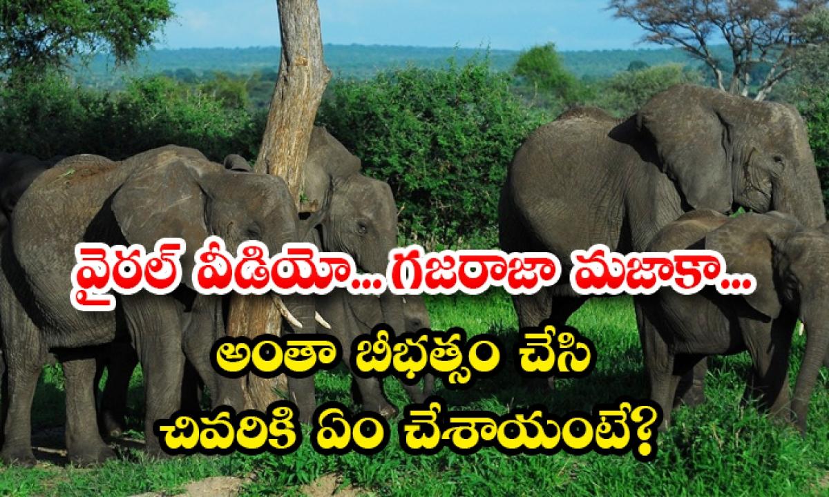 Viral Video Elephants In Tamilnadu Trash Out All Banana Trees Except With Birds Nest-వైరల్ వీడియో…గజరాజా మజాకా…అంతా బీభత్సం చేసి చివరికి ఏం చేశాయంటే-General-Telugu-Telugu Tollywood Photo Image-TeluguStop.com