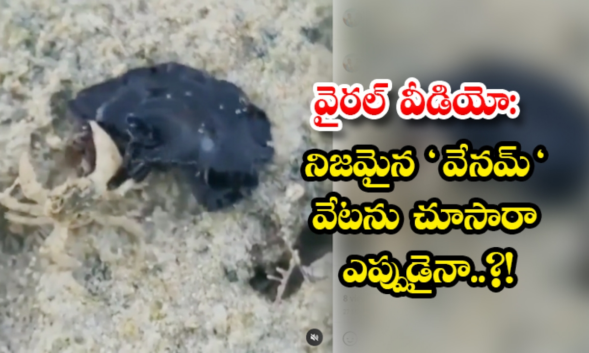 Viral Video Have You Seen The Real Venom Hunting-వైరల్ వీడియో: నిజమైన వేనమ్ వేటను చూసారా ఎప్పుడైనా..-General-Telugu-Telugu Tollywood Photo Image-TeluguStop.com