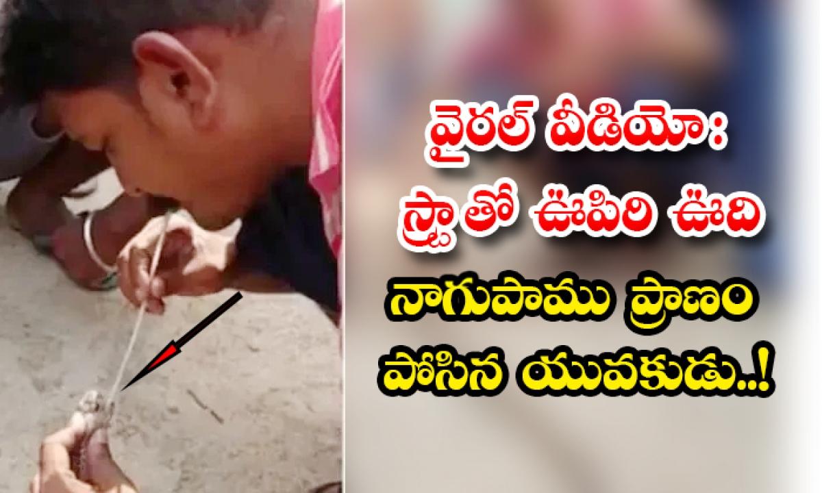 Viral Video Man Gives Artificial Breathe To A Snake With Straw In Odisha-వైరల్ వీడియో: స్ట్రా తో ఊపిరి ఊది నాగుపాము ప్రాణం పోసిన యువకుడు..-General-Telugu-Telugu Tollywood Photo Image-TeluguStop.com
