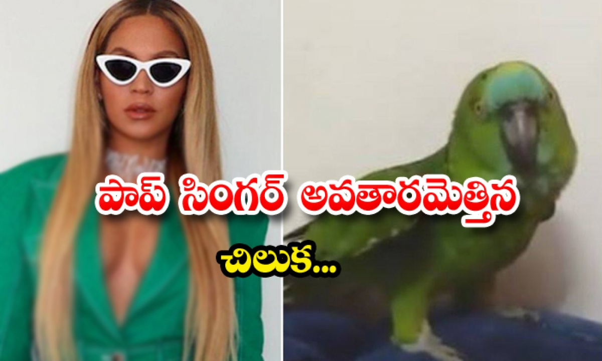 Viral Video Parrot Singing Beyonce Song-TeluguStop.com