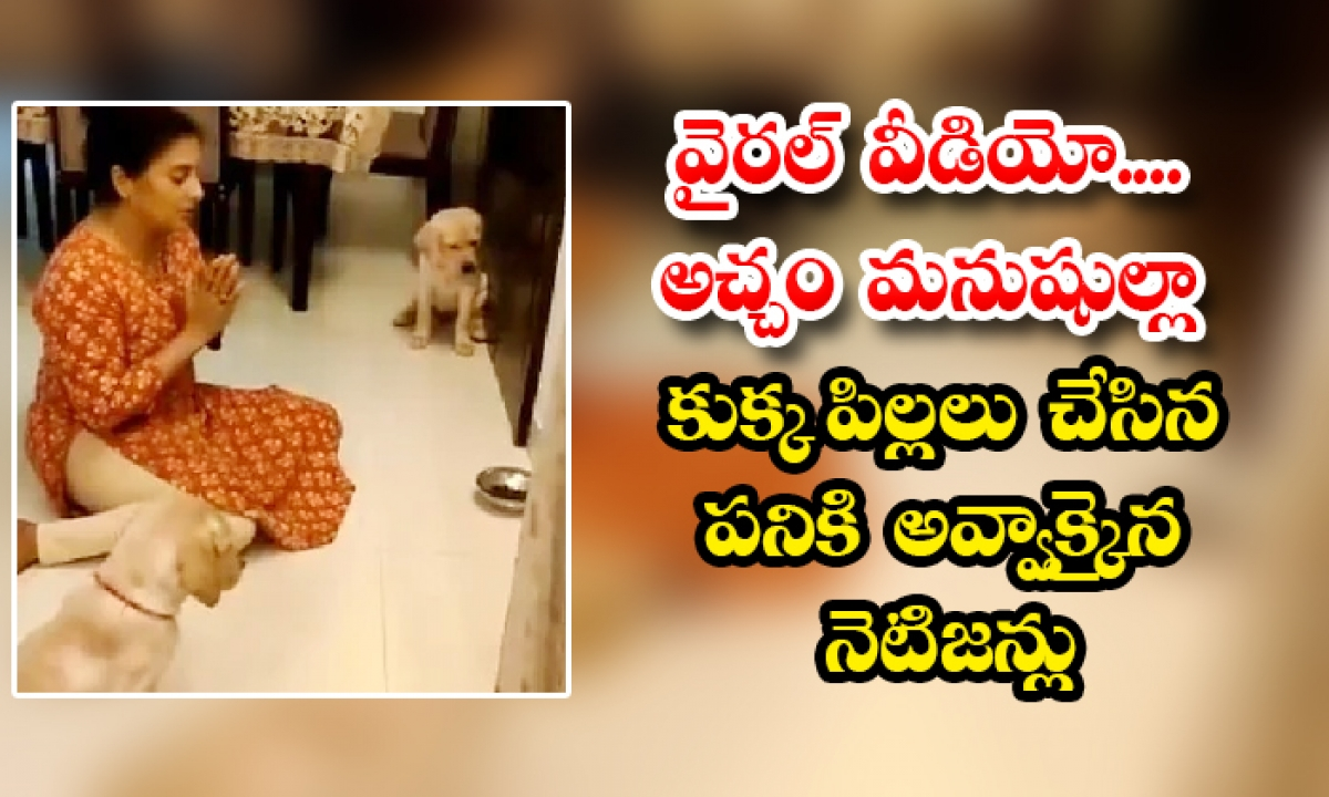 Puppies Are Praying To God Before Eating Netizens Shocked Viral Video-TeluguStop.com