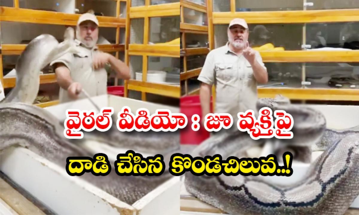 Viral Video Python Attacked Zoo Keeper In California-వైరల్ వీడియో: జూ వ్యక్తి పై దాడి చేసిన కొండచిలువ..-General-Telugu-Telugu Tollywood Photo Image-TeluguStop.com