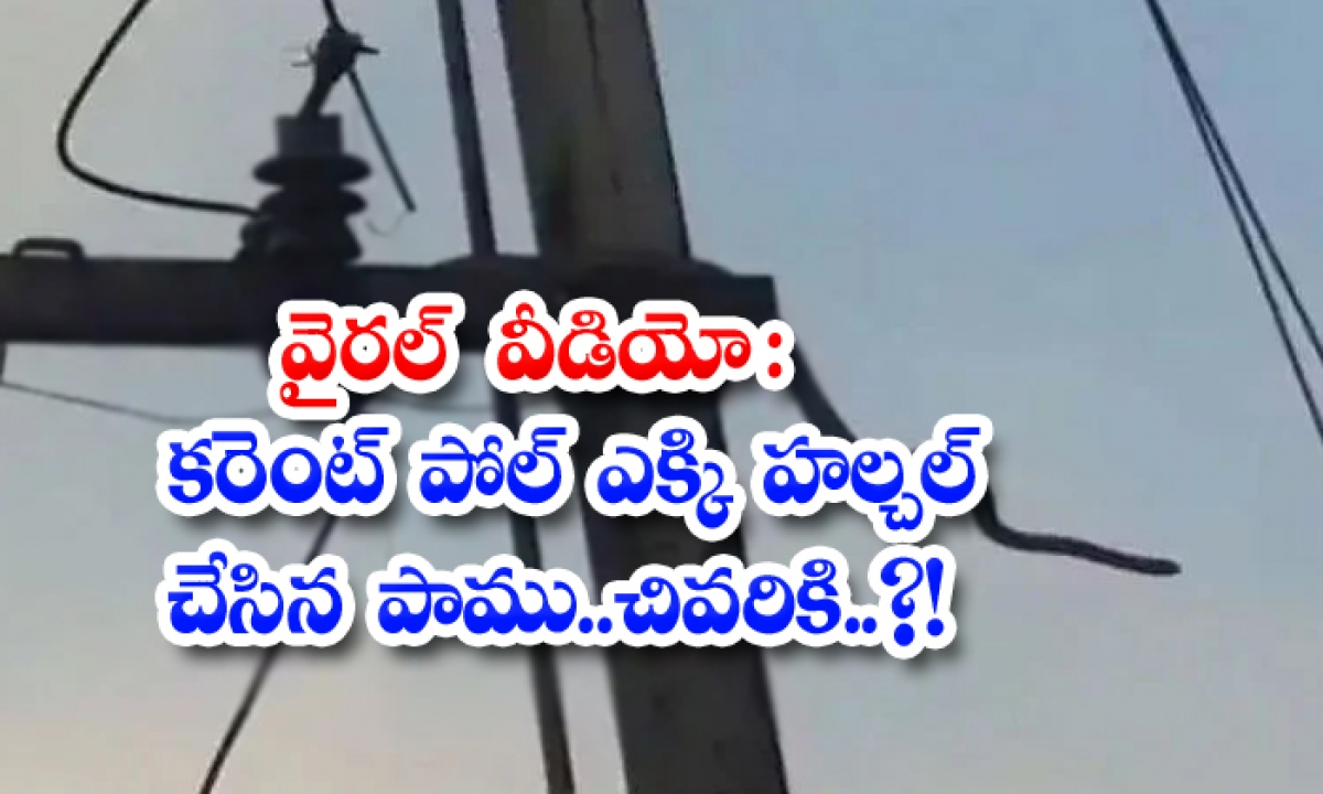 Viral Video A Huge Snake That Climbed The Current Pole And Made A Commotion Finally-TeluguStop.com
