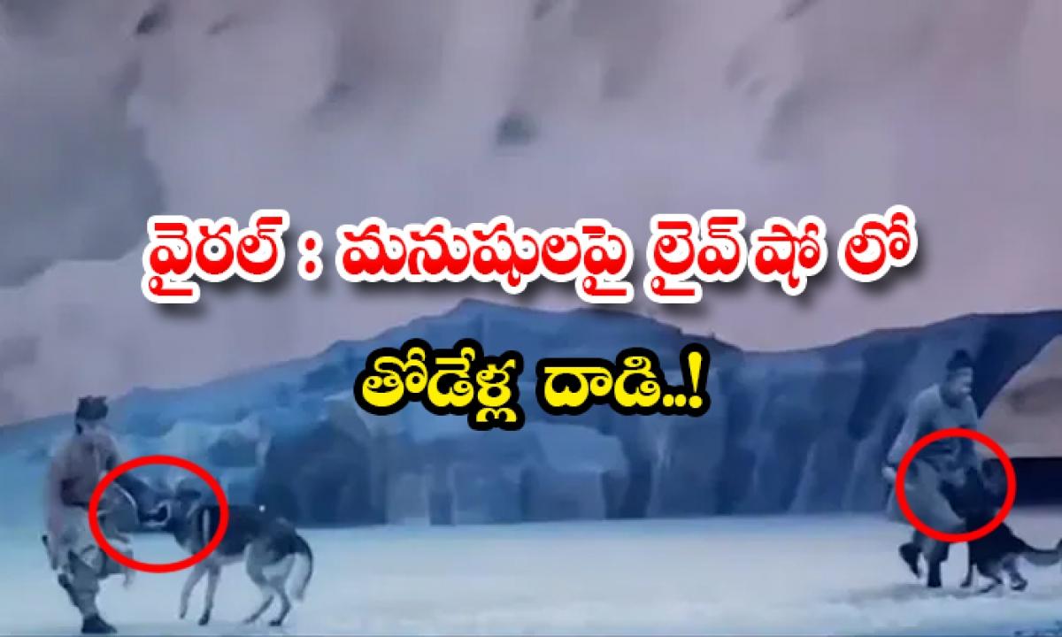 Viral Wolves Performance Gone Wrong In China Attacks Men In Live-వైరల్: మనుషులపై లైవ్ షో లో తోడేళ్ల దాడి..-General-Telugu-Telugu Tollywood Photo Image-TeluguStop.com