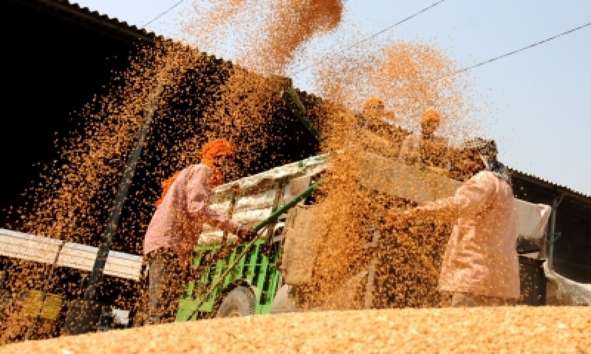 Wheat Procurement Up 1/3rd Over Last Year: Food Ministry-TeluguStop.com