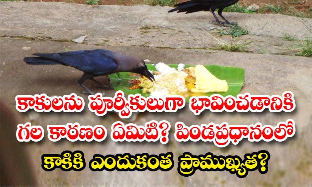 Why Crows Are Considered To Be The Form Of Ancestors Know The Story-కాకులను పూర్వీకులుగా భావించడానికి గల కారణం ఏమిటి పిండప్రధానంలో కాకికి ఎందుకంత ప్రాముఖ్యత-Latest News - Telugu-Telugu Tollywood Photo Image-TeluguStop.com