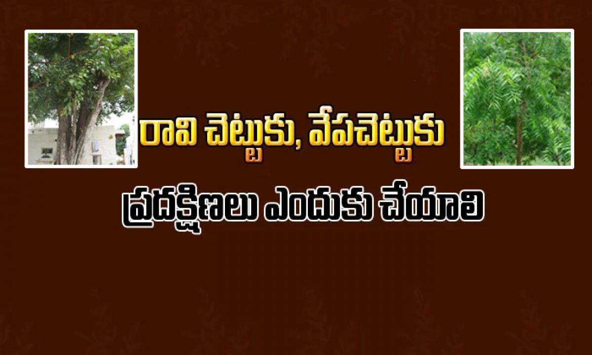 Why Do We See Neem And Peepal Tree In Temple-రావి చెట్టు, వేప చెట్టుకు ప్రదక్షిణలు ఎందుకు చేయాలి-Devotional-Telugu Tollywood Photo Image-TeluguStop.com