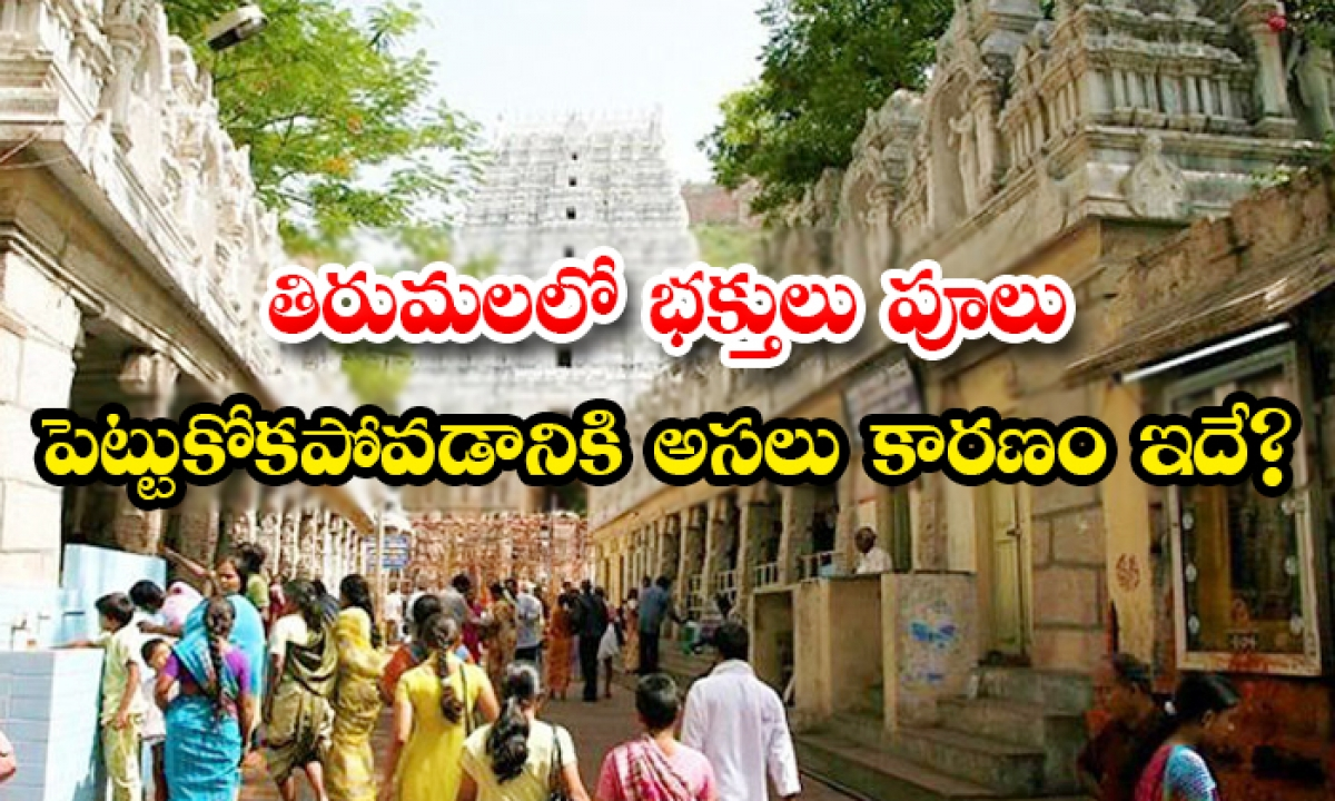 Why Devotees Should Not Put Flowers In Thirumala-తిరుమలలో భక్తులు పూలు పెట్టుకోకపోవడానికి అసలు కారణం ఇదే-Latest News - Telugu-Telugu Tollywood Photo Image-TeluguStop.com