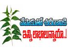 Amazing Health Benefits Of Neem-TeluguStop.com