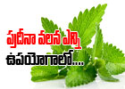 Healthy Benefits Of Mint-Healthy Benefits Of Mint-Telugu Health-Telugu Tollywood Photo Image-TeluguStop.com