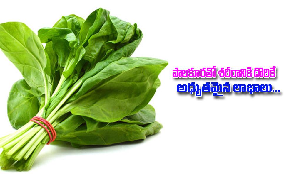 Amazing Benefits Of Spinach-TeluguStop.com