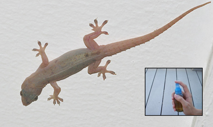 How To Get Rid Of Lizards At Home Useful Tips-TeluguStop.com