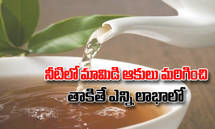 Healthy Benefits Of Drinking Boiled Mango Leaves Water-TeluguStop.com