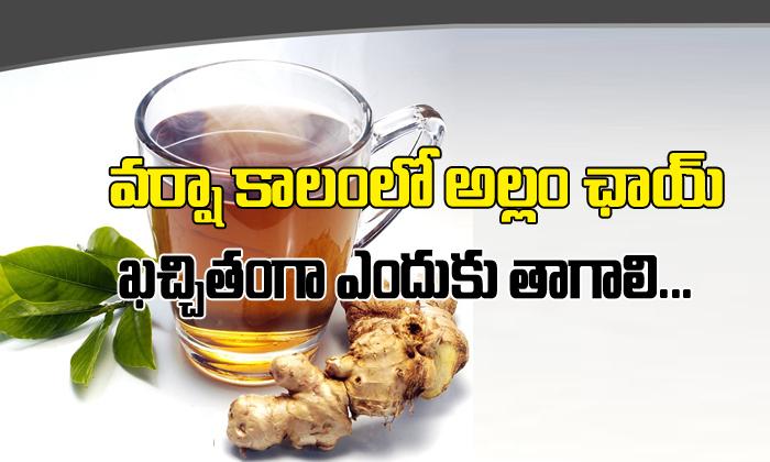 Why You Should Drink Ginger Tea In Rainy Season-Telugu Health-Telugu Tollywood Photo Image-TeluguStop.com