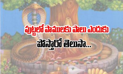 Why We Pour Milk To Snake1-పుట్టలో పాములకు పాలు ఎందుకు పోస్తారో తెలుసా -Devotional-Telugu Tollywood Photo Image-TeluguStop.com