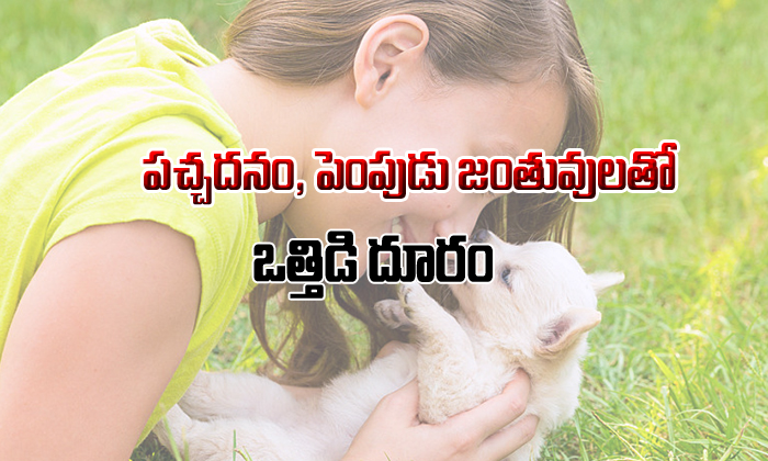 Nature And Pets Are Stress Relief Tools-పచ్చదనం,పెంపుడు జంతువులతో ఒత్తిడి దూరం-Telugu Health-Telugu Tollywood Photo Image-TeluguStop.com