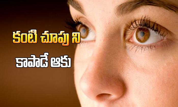 Sessile Leafs Control Our Eye Problems-కంటి చూపుని కాపాడే ఆకు-Telugu Health-Telugu Tollywood Photo Image-TeluguStop.com