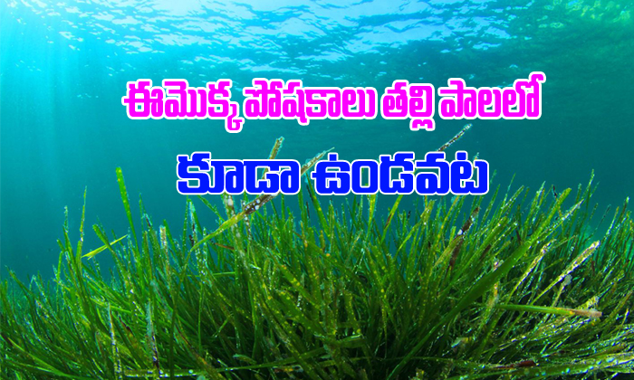 Spirulina Plant Benefits-TeluguStop.com