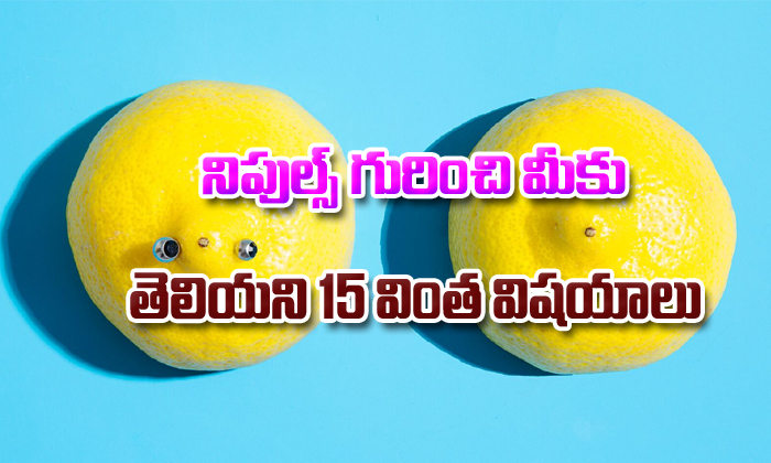 15 Interesting Facts About Nipples-Telugu Stop Exclusive Top Stories-Telugu Tollywood Photo Image-TeluguStop.com