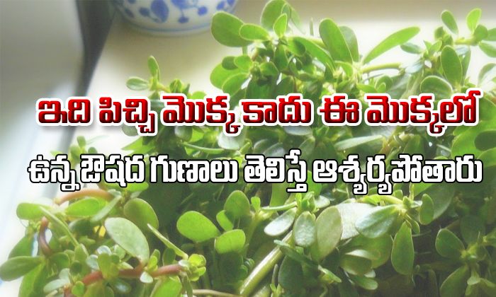 Ganga Payala Aaku Uses And Health Benefits-TeluguStop.com