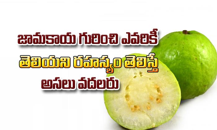 Health Benefits Of Guava-TeluguStop.com