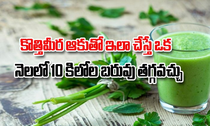Coriander Leaves Juice For Weight Loss-TeluguStop.com