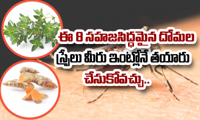 8 Natural Mosquito Sprays You Can Make At Home-TeluguStop.com