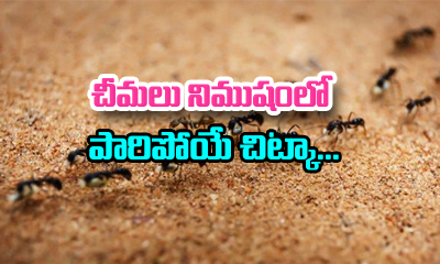 How To Get Rid Of Ant At Home-TeluguStop.com