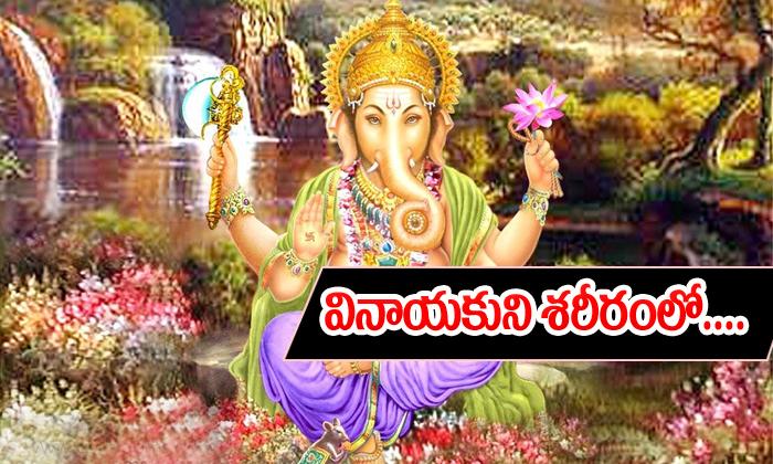 Lord Vinayakaspecialty-వినాయకుని శరీరంలో ఏ భాగం దేనికి సూచిస్తుందో తెలుసా-Telugu Bhakthi-Telugu Tollywood Photo Image-TeluguStop.com