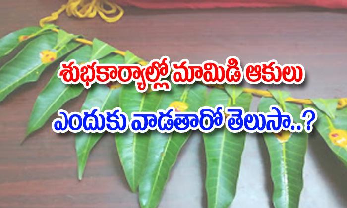 Mango Leaves Spiritual Significance-TeluguStop.com