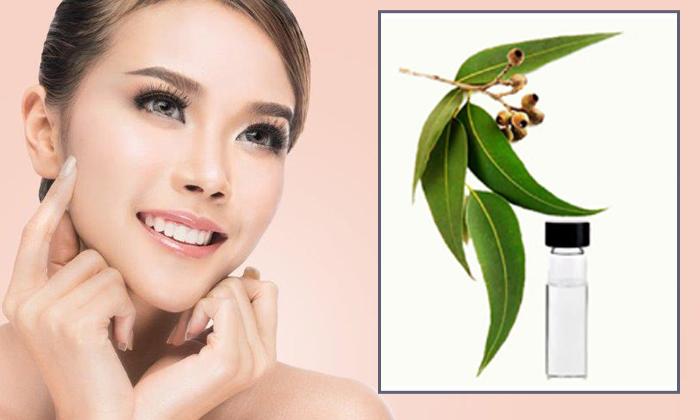 Eucalyptus Oil Beauty Benefits-TeluguStop.com