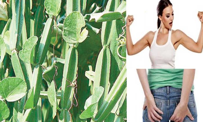 Nalleru Health Benefits-TeluguStop.com