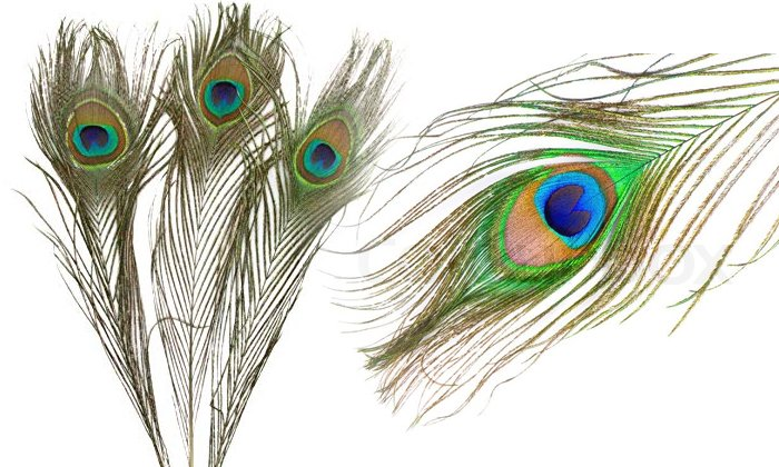 Positive Effects Of Keeping Peacock Feathers At Home-TeluguStop.com