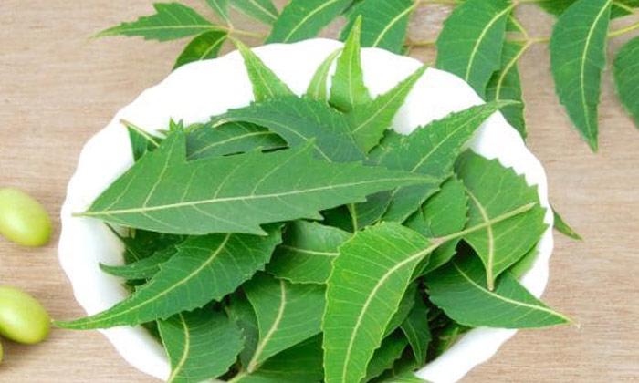 Telugu Biryani Leaf, Curry Leaves, Diabetes Control, Neem Leaves-