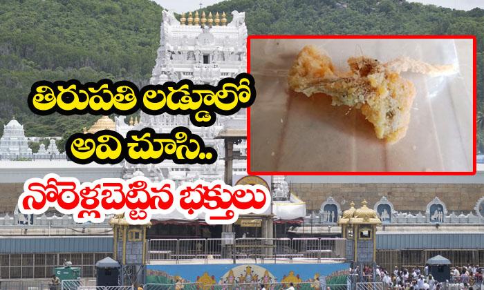 Thread And Hair Found In Tirupati Laddu-TeluguStop.com