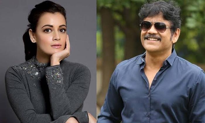Telugu Dia Mirza, Nagarjuna, Tollywood Movie News, Wild Dog-