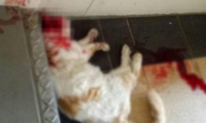 Cat Animal Raped Minor Boy Pakistan-TeluguStop.com