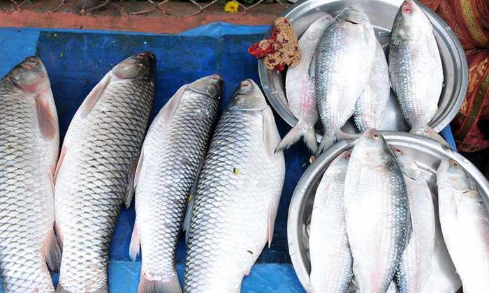 Pulasa Costly Godavari Districts Four Thousand-TeluguStop.com