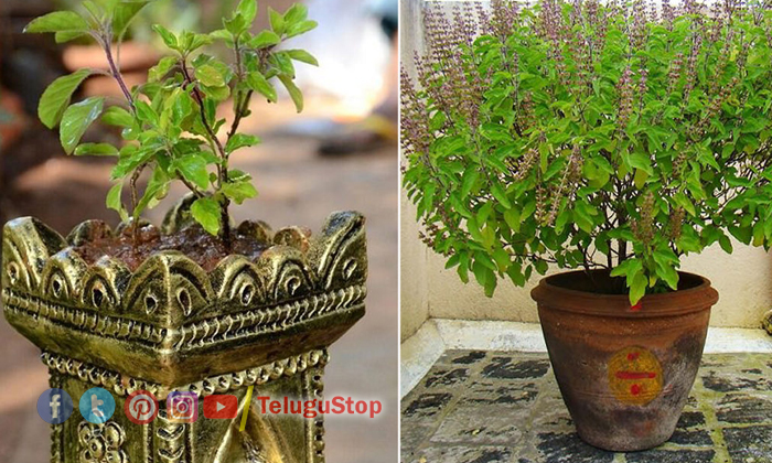 Thulasi Pooja Will Make Rich People-TeluguStop.com