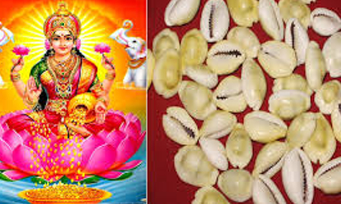 Do You Know Why Shells Are Considered As Lakshmidevi Brothers-TeluguStop.com