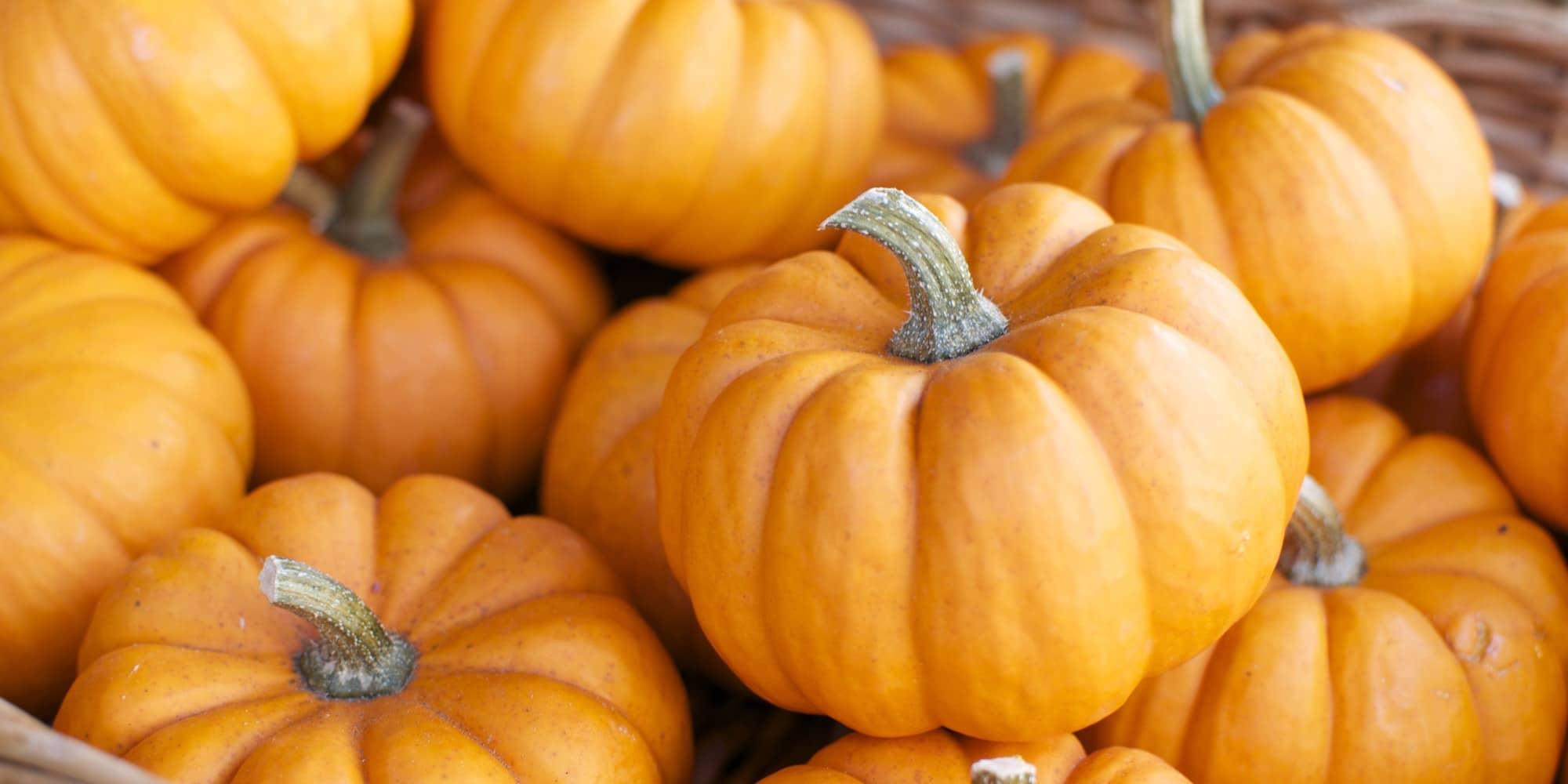 Is It Safe To Eat Pumpkins During Pregnancy-TeluguStop.com