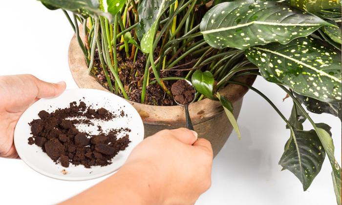 Telugu Coffee, Coffee Tips, Creative Ways, Latest News, Lifestyle, Use Coffee-Telugu Health - తెలుగు హెల్త్ టిప్స్ ,చిట్కాలు