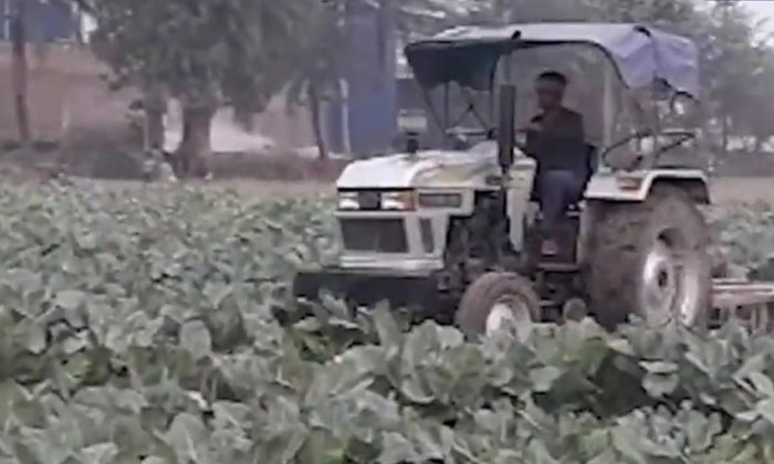 Viral Video Farmer Plows His Entire Crop With Anger-TeluguStop.com