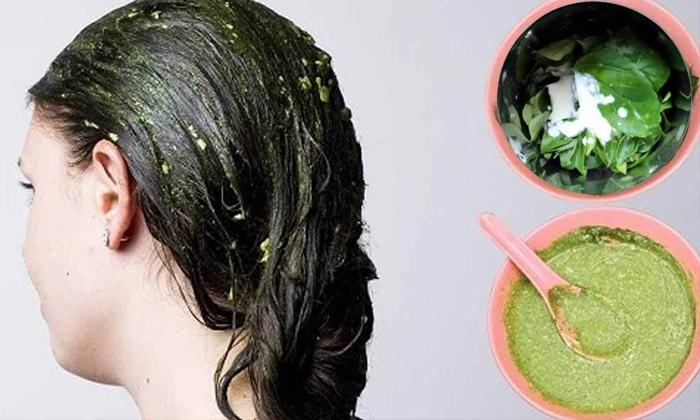 Telugu Beauty, Beauty Tips, Benefits Of Hibiscus Leaves, Hair, Hair Care, Hair Problems, Hibiscus Leaves, Latest News-Telugu Health - తెలుగు హెల్త్ టిప్స్ ,చిట్కాలు