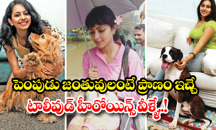 TeluguStop.com - Tollywood Heroines With Their Adorable Pets