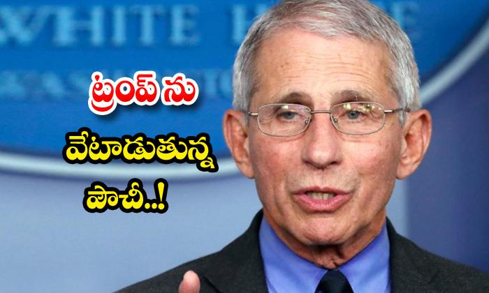 Anthony Fauci Fires On Donald Trump Govt-TeluguStop.com