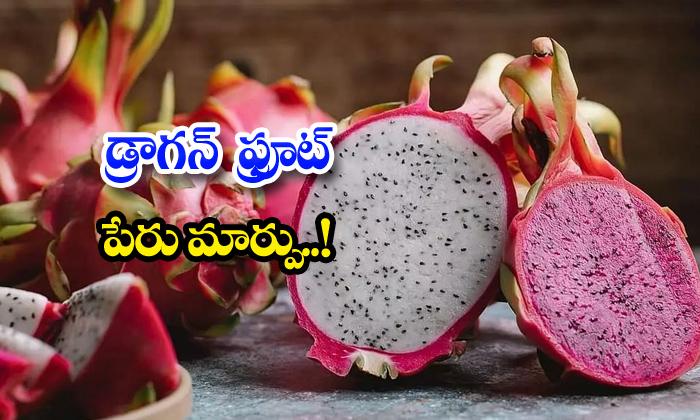 TeluguStop.com - Gujarat Governmernt Dragon Fruit Name Change Kamalm