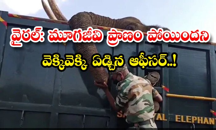 The Officer Cried Out That The Elephant Was Dead-TeluguStop.com
