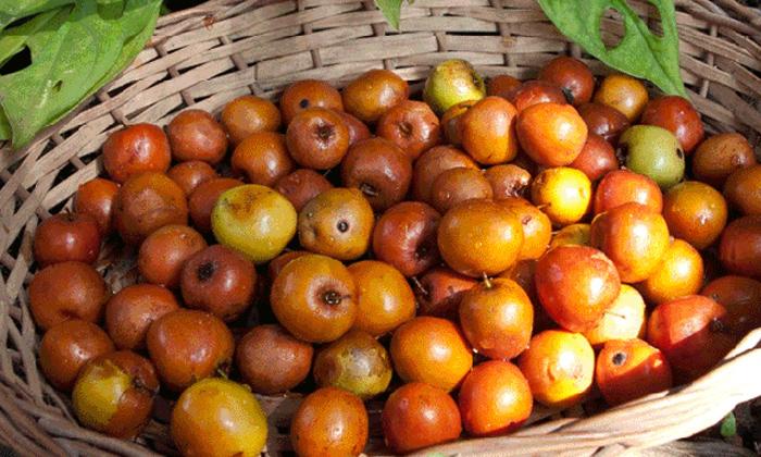 Telugu Anemia, Benefit Of Ber Fruit, Ber Fruit, Good Health, Health, Health Tips, Latest News, Reduce Anemia, Regi Pandu-Telugu Health - తెలుగు హెల్త్ టిప్స్ ,చిట్కాలు