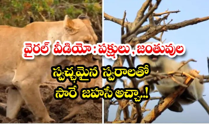 TeluguStop.com - Viral Video Saare Jahase Achcha With Pure Voices Of Birds And Animals